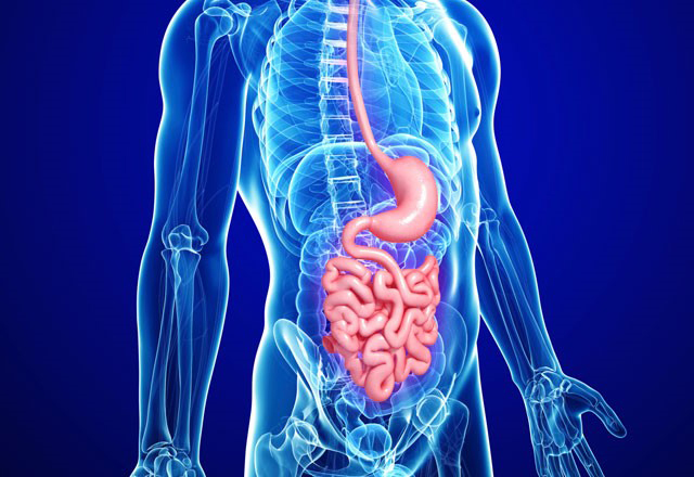 Методи обстеження верхніх відділів шлунково-кишкового тракту в практиці сімейного лікаря: специфічність та інформативність