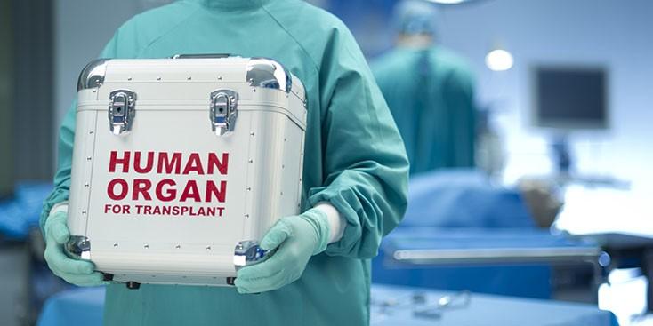 Трансплантация органов влияет на возникновение и развитие меланомы