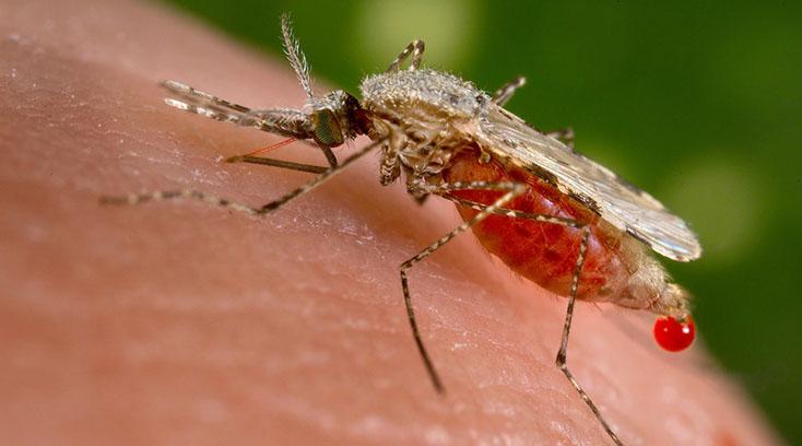 Вирус Зика: ожидаются новые эффективные методы борьбы с комарами