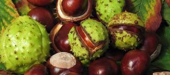 Антиоксидантный потенциал экстракта семян конского каштана и эсцина в отношении активных форм кислорода и азота