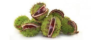 Влияние экстракта семян конского каштана  на функцию эндотелия сосудов  вусловиях воспаления