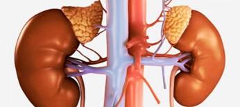 Эректильная дисфункция при хронической болезни почек: от патофизиологии до ведения