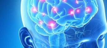 Гипоталамо-пролактиновая ось. Часть 1: история изучения, нейроэндокринный контроль секреции пролактина