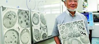 Нобелевская премия в области физиологии и медицины присуждена японскому ученому