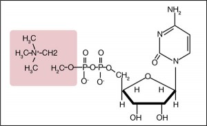 Рис. 1. Химическая структура цитиколина