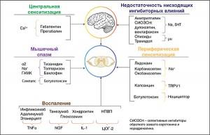 Рис. 1. Механизмы боли и мишени препаратов согласно концепции  механизм-обоснованного выбора терапии