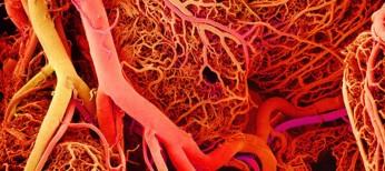 Вплив ніцерголіну на гемодинаміку у пацієнтів, що перенесли ішемічний інсульт