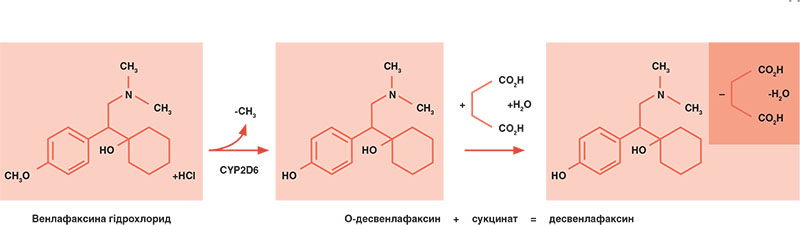 Рис. 2. Структура форми препаратів