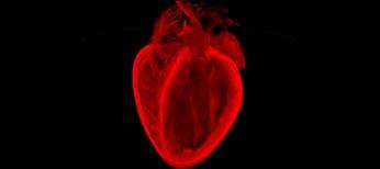 Генная терапия сердечной недостаточности:  отдаленная перспектива