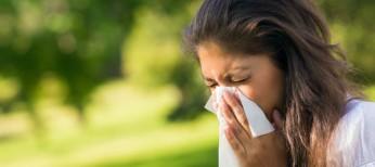 Фитосредства в превентивной  терапии аллергических заболеваний
