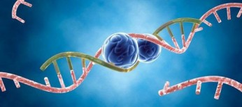 МікроРНК та їхня роль при деяких аутоімунних захворюваннях