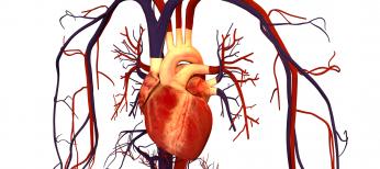 Возможности антагониста кальция амлодипина (Норваск®) в лечении сердечно-сосудистых заболеваний