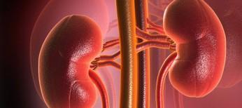 Носійство умовнопатогенних мікроорганізмів  тавиживання хворих нахронічну хворобу нирок VД стадії