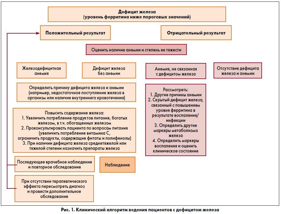 Оценка статуса железа в организме: что нужно знать практикующему врачу?