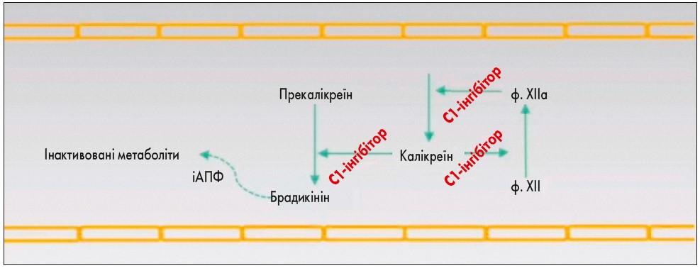 Рецидивуючий ангіоневротичний набряк: сучасне розуміння тадиференційна діагностика