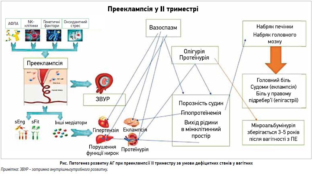 Клінічна школа з питань артеріальної гіпертензії: коморбідність і супутні стани