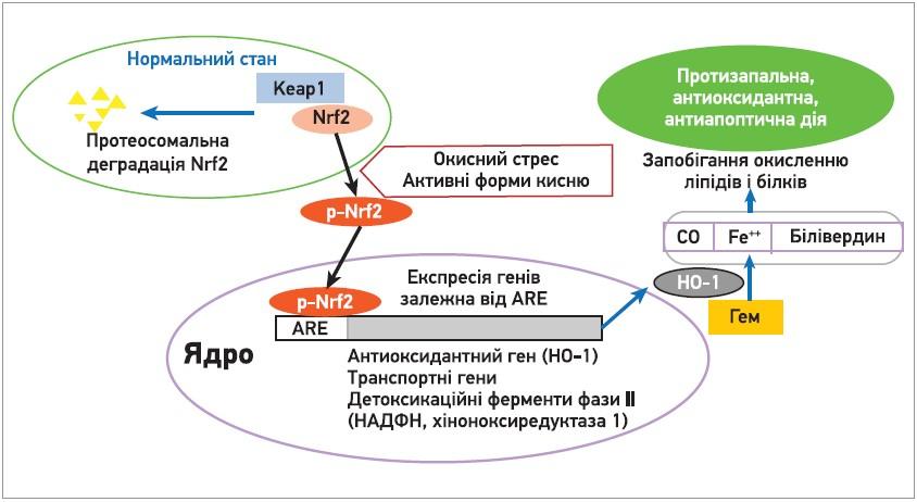 Перспективи застосування едаравону в клінічній практиці:  нові можливості в лікуванні нейродегенеративних, гіпоксичних і запальних патологій